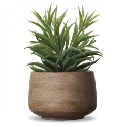 Plante grasse en pot
