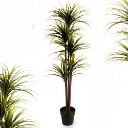 Yucca tropical ALOIFOLIA - 110 cm