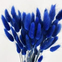 Deux branches de LAGURUS - Bleues séchées