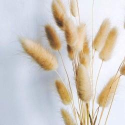 Botte LAGURUS - Naturelles séchées