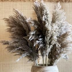 Fleur de PAMPA 90cm - 3 branches grises séchées